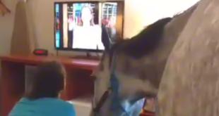 Mit dem Pferd im Hotelzimmer