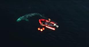 Spektakulärer Rettungsversuch eines Wals geht viral