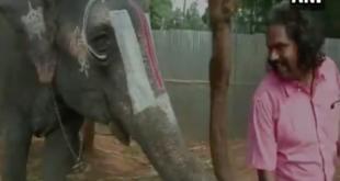 Der musikalischste Elefant der Welt lebt in Indien