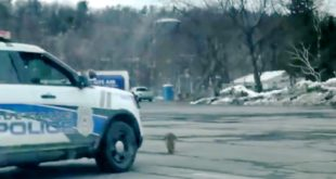 Polizei versucht während 15 Minuten einen Waschbären zu überfahren